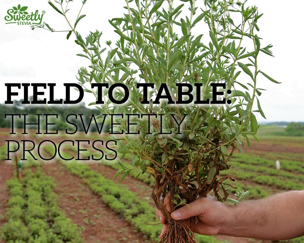 From Field to Table: The Sweetly Way